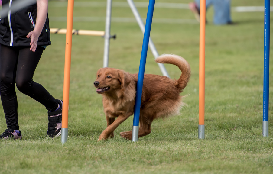 tollare-agility-179