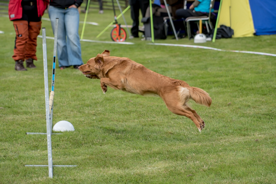 tollare-agility-18