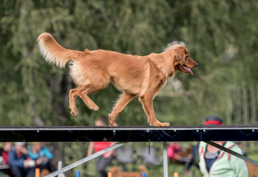tollare-agility-181