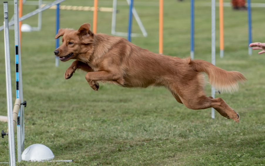 tollare-agility-182