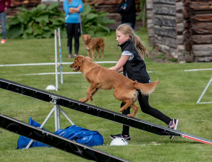 tollare-agility-184
