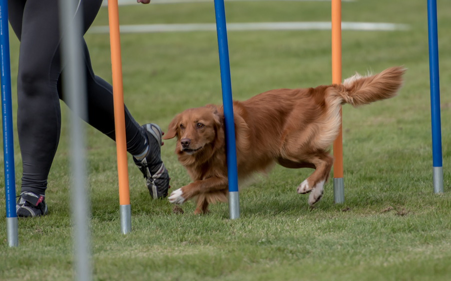 tollare-agility-185