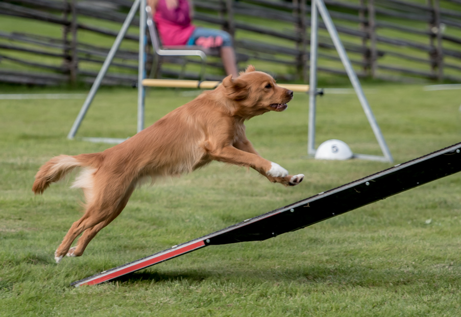 tollare-agility-188