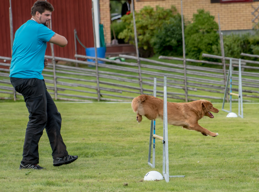 tollare-agility-19