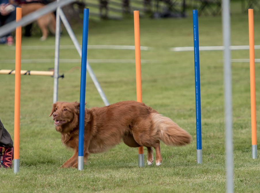 tollare-agility-190