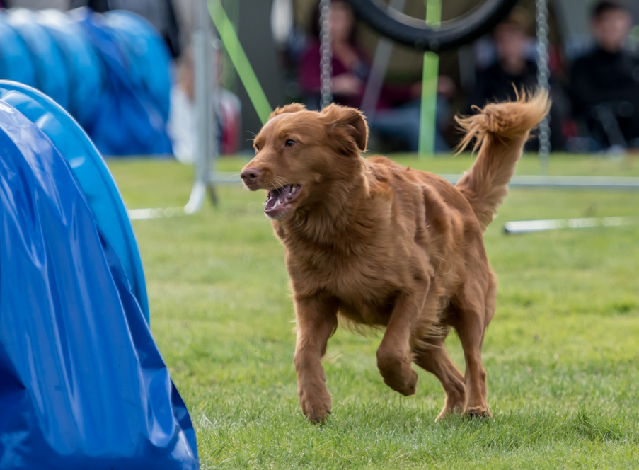 tollare-agility-192
