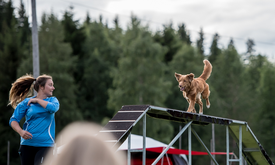 tollare-agility-199