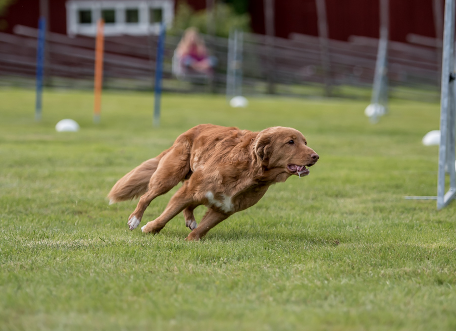 tollare-agility-201