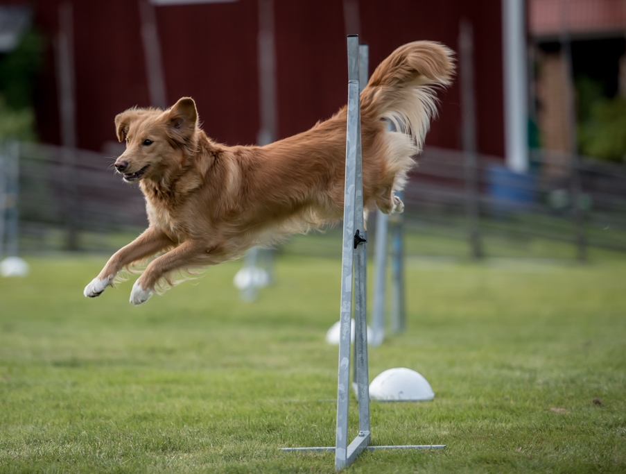 tollare-agility-207