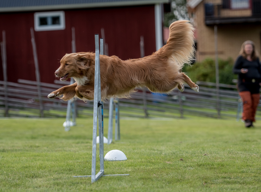 tollare-agility-211