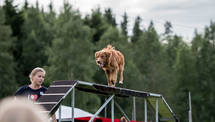 tollare-agility-212