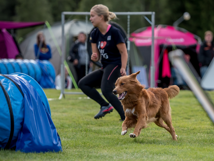 tollare-agility-213