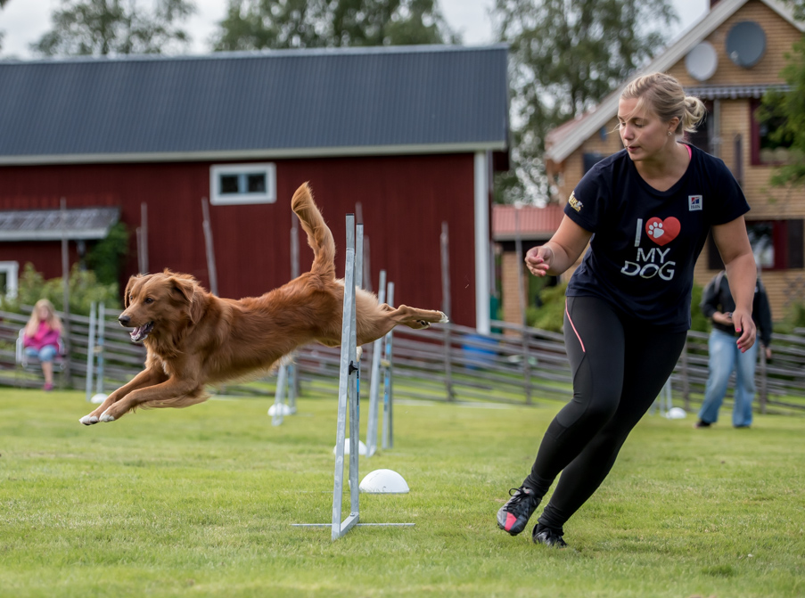 tollare-agility-214
