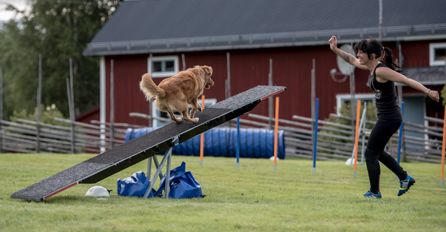 tollare-agility-222
