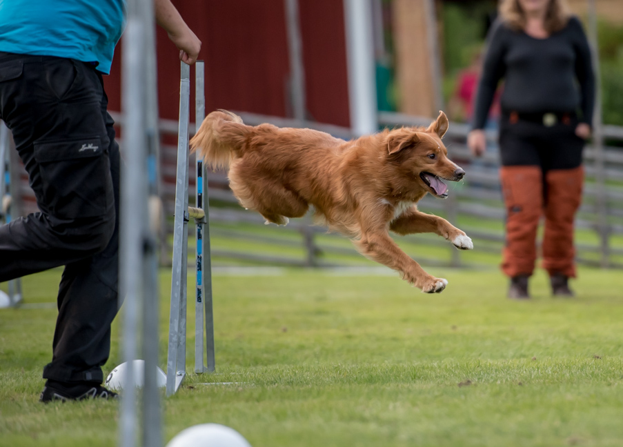 tollare-agility-224