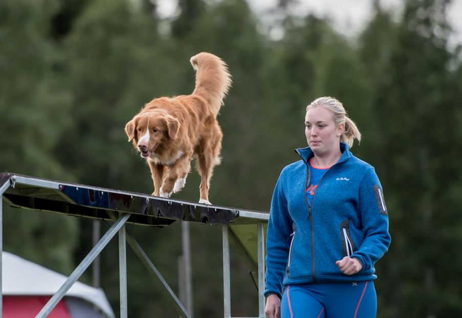 tollare-agility-228