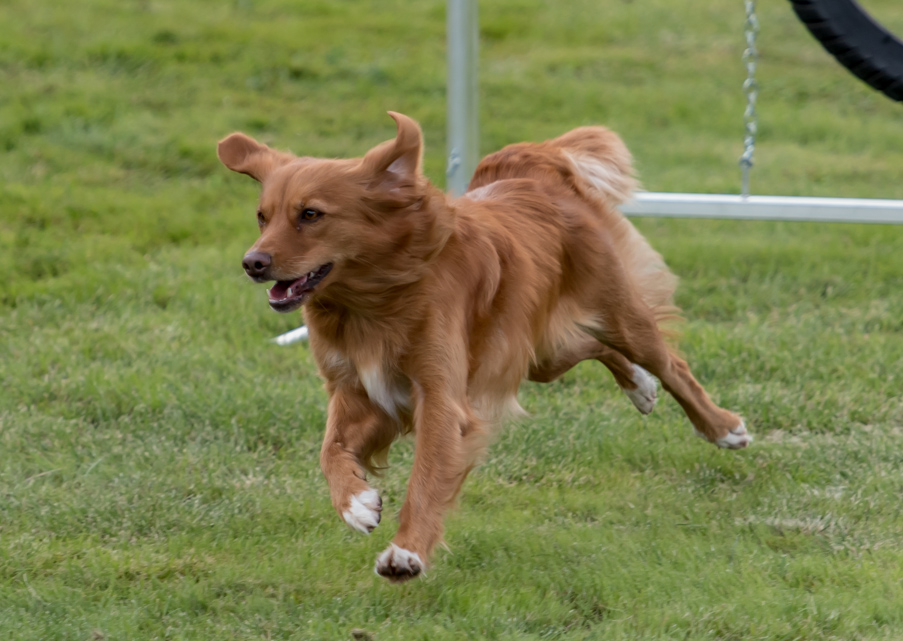 tollare-agility-23