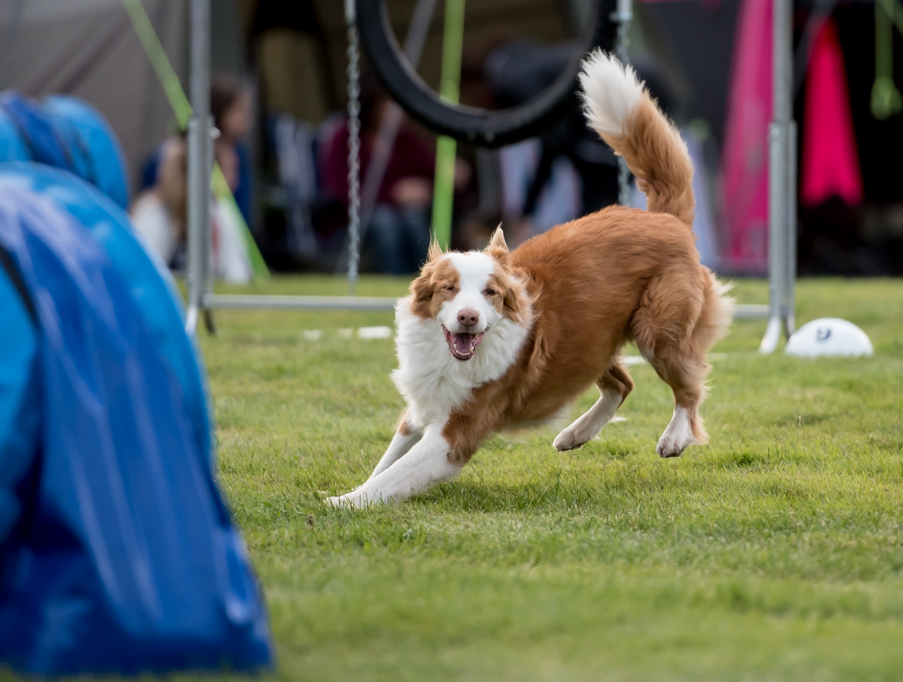tollare-agility-231
