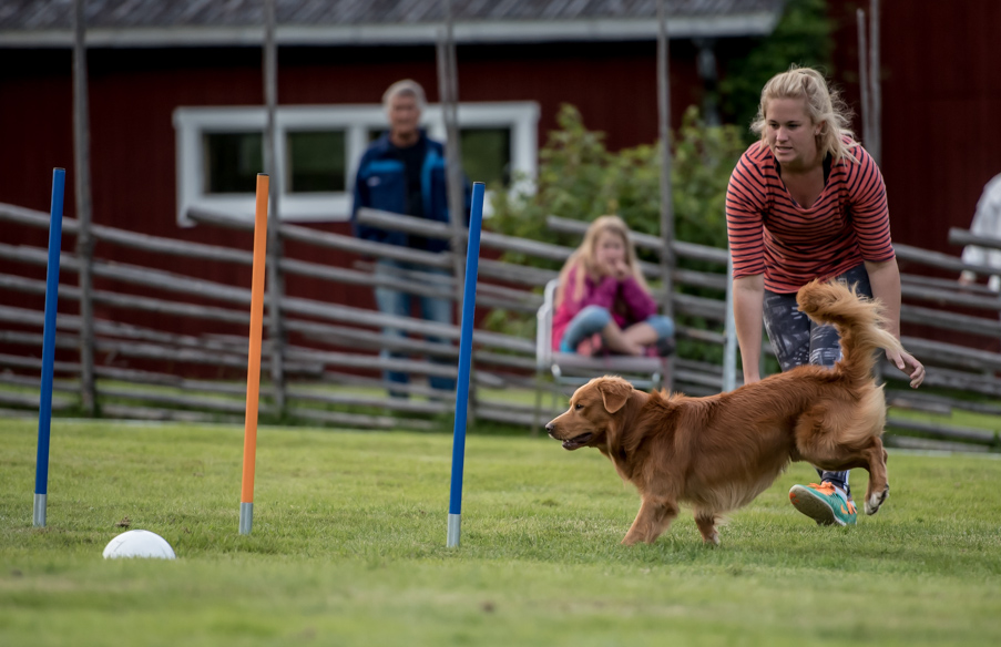 tollare-agility-232