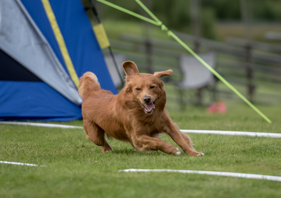 tollare-agility-233