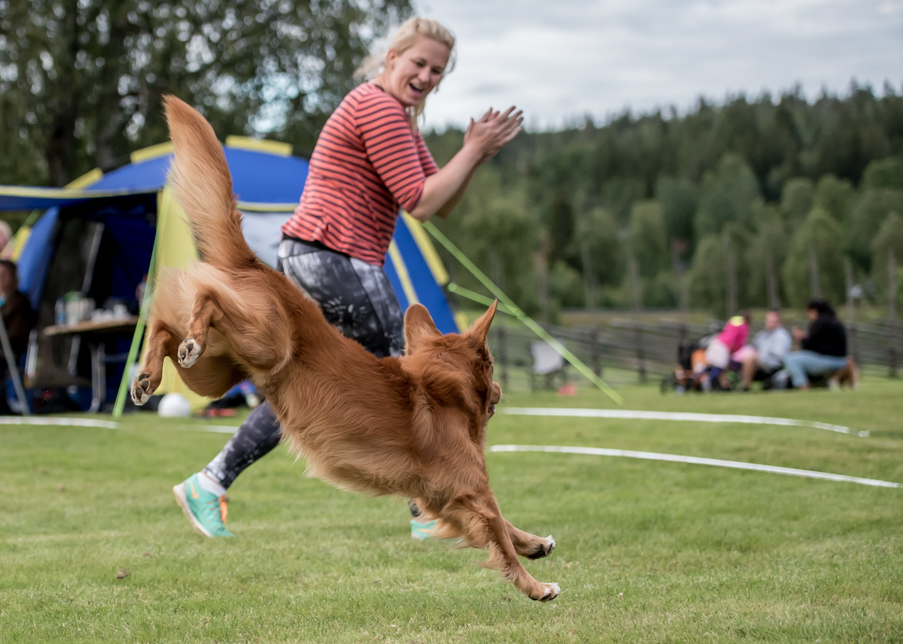 tollare-agility-235