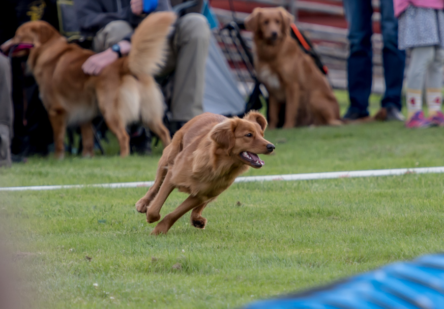 tollare-agility-26
