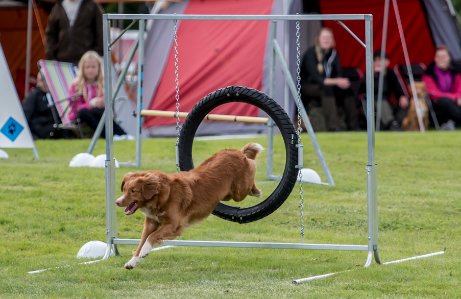 tollare-agility-3