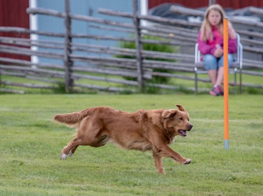 tollare-agility-31