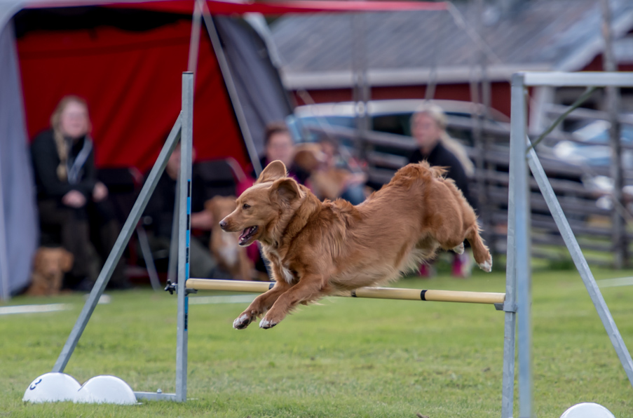 tollare-agility-32