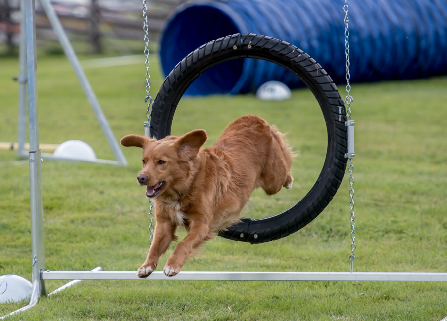 tollare-agility-34