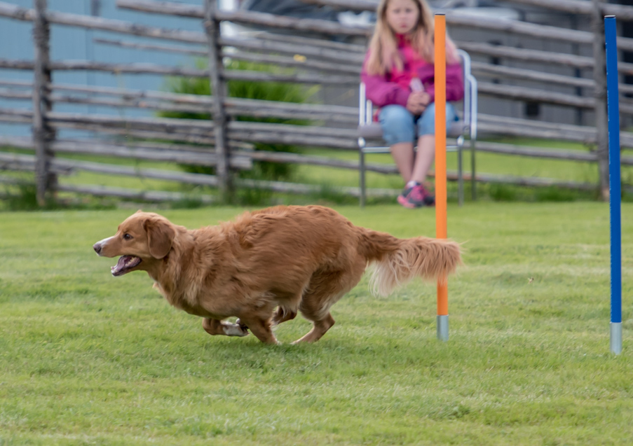 tollare-agility-36
