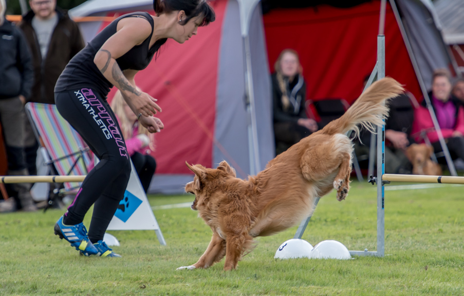 tollare-agility-37