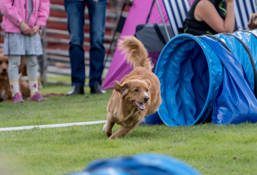 tollare-agility-38