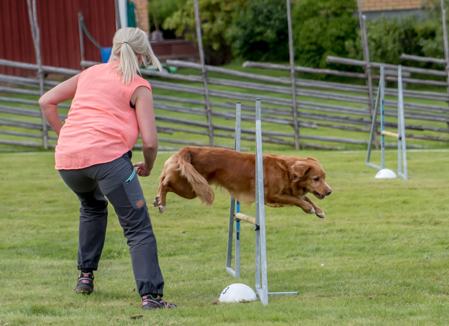 tollare-agility-4