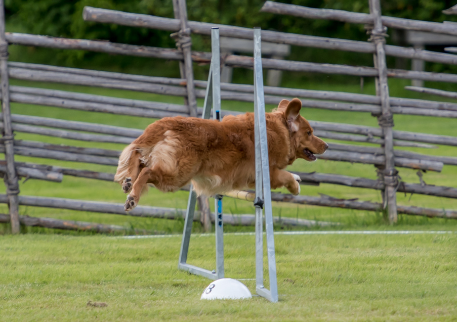 tollare-agility-41