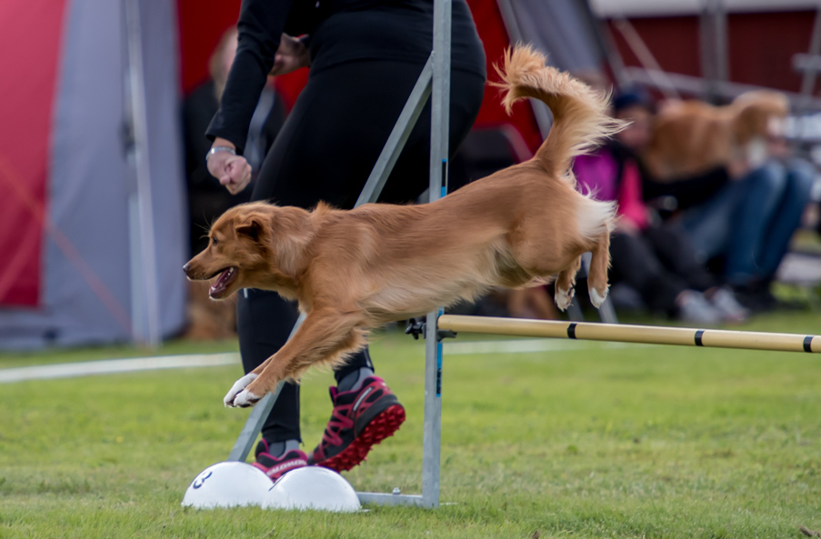 tollare-agility-43