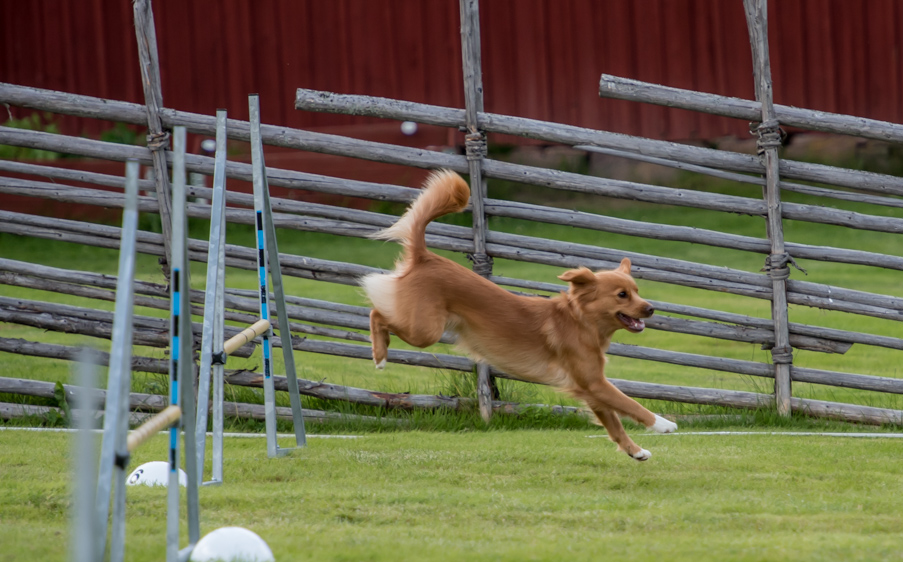 tollare-agility-47