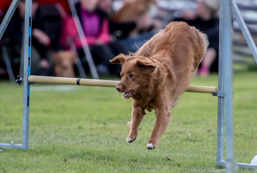 tollare-agility-49