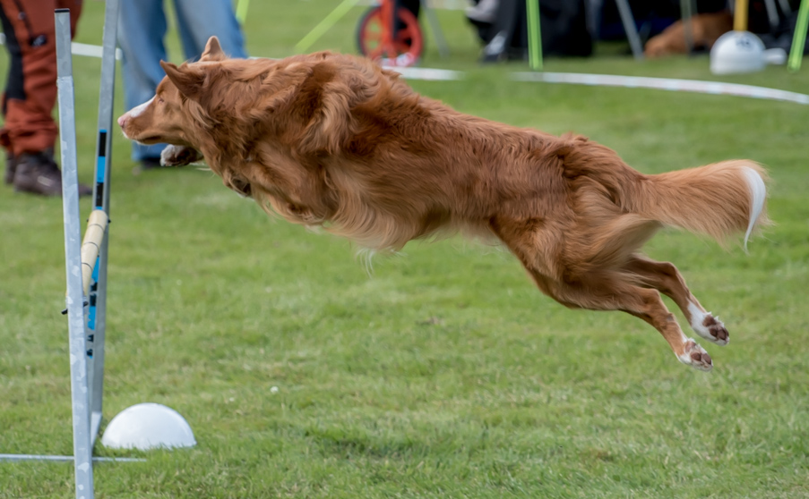 tollare-agility-52
