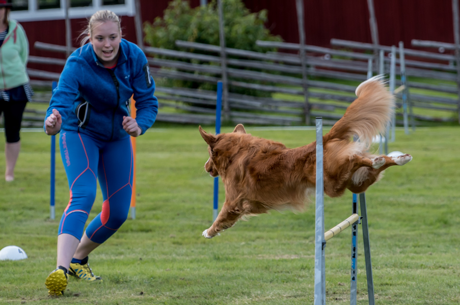 tollare-agility-53