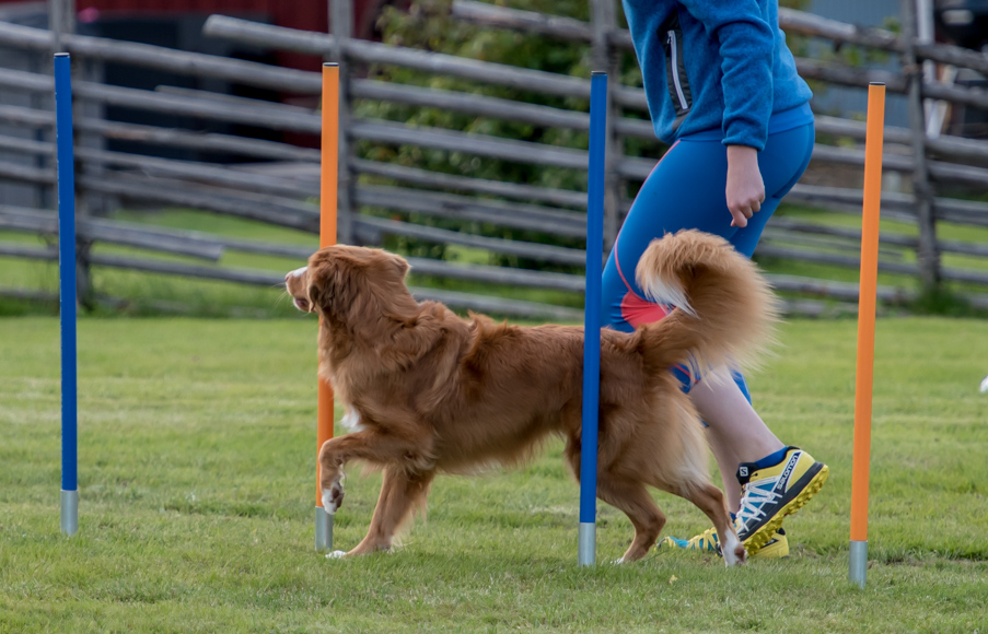 tollare-agility-54