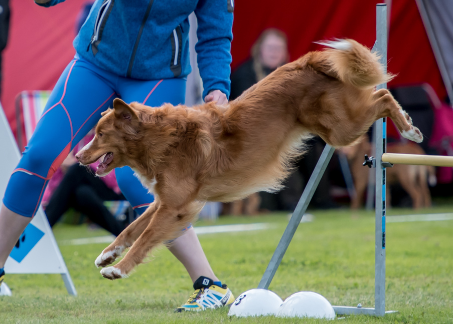 tollare-agility-55
