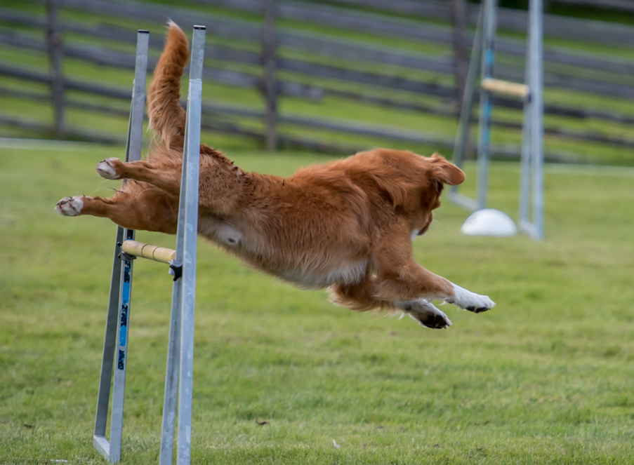 tollare-agility-57