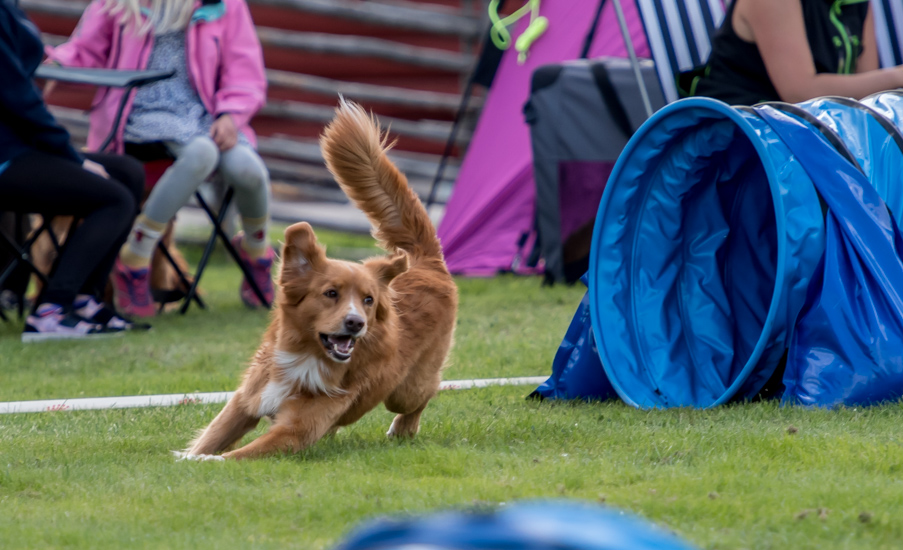 tollare-agility-58