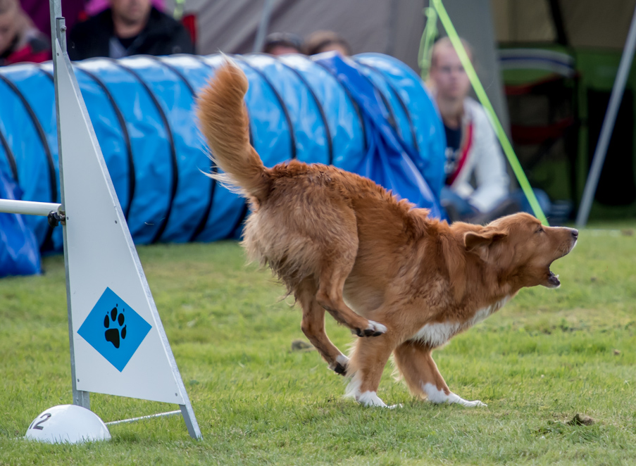 tollare-agility-59