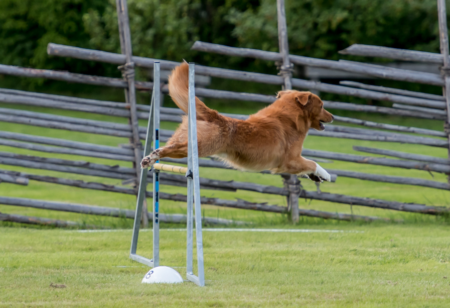 tollare-agility-61