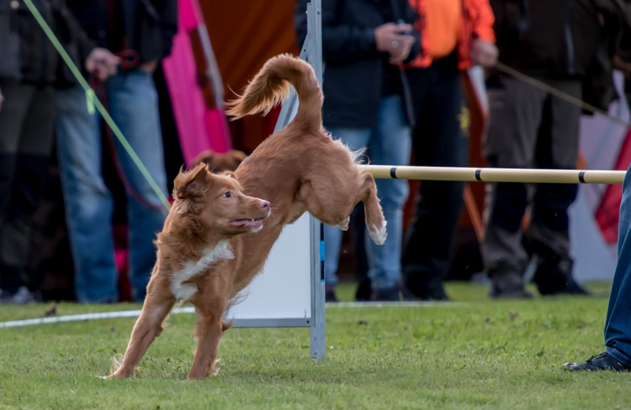 tollare-agility-67
