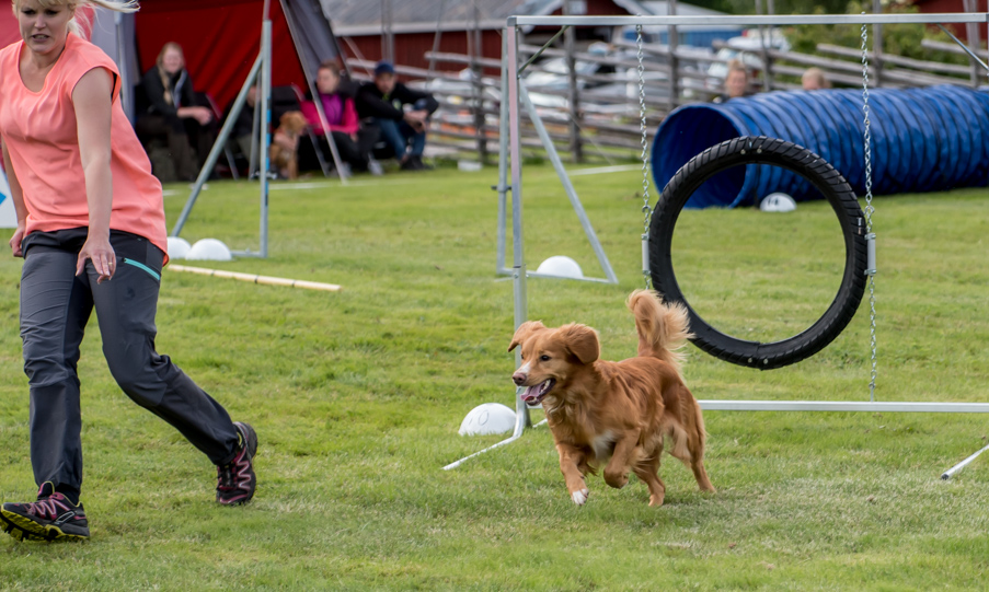 tollare-agility-7
