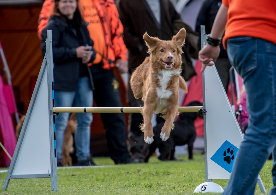 tollare-agility-70