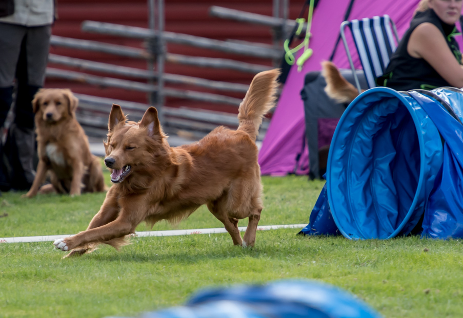 tollare-agility-72